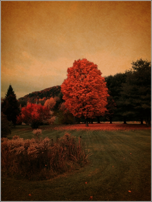 Fall, Thetford Vt by Dena T Bray for Sewn in Vermont©